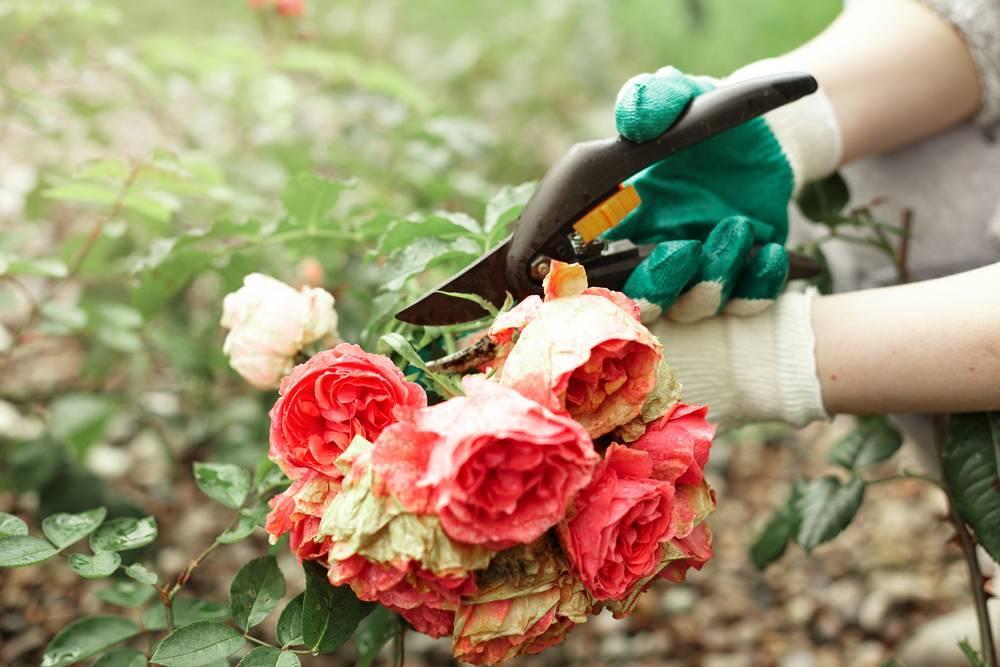 Garden Maintenance in Abingdon