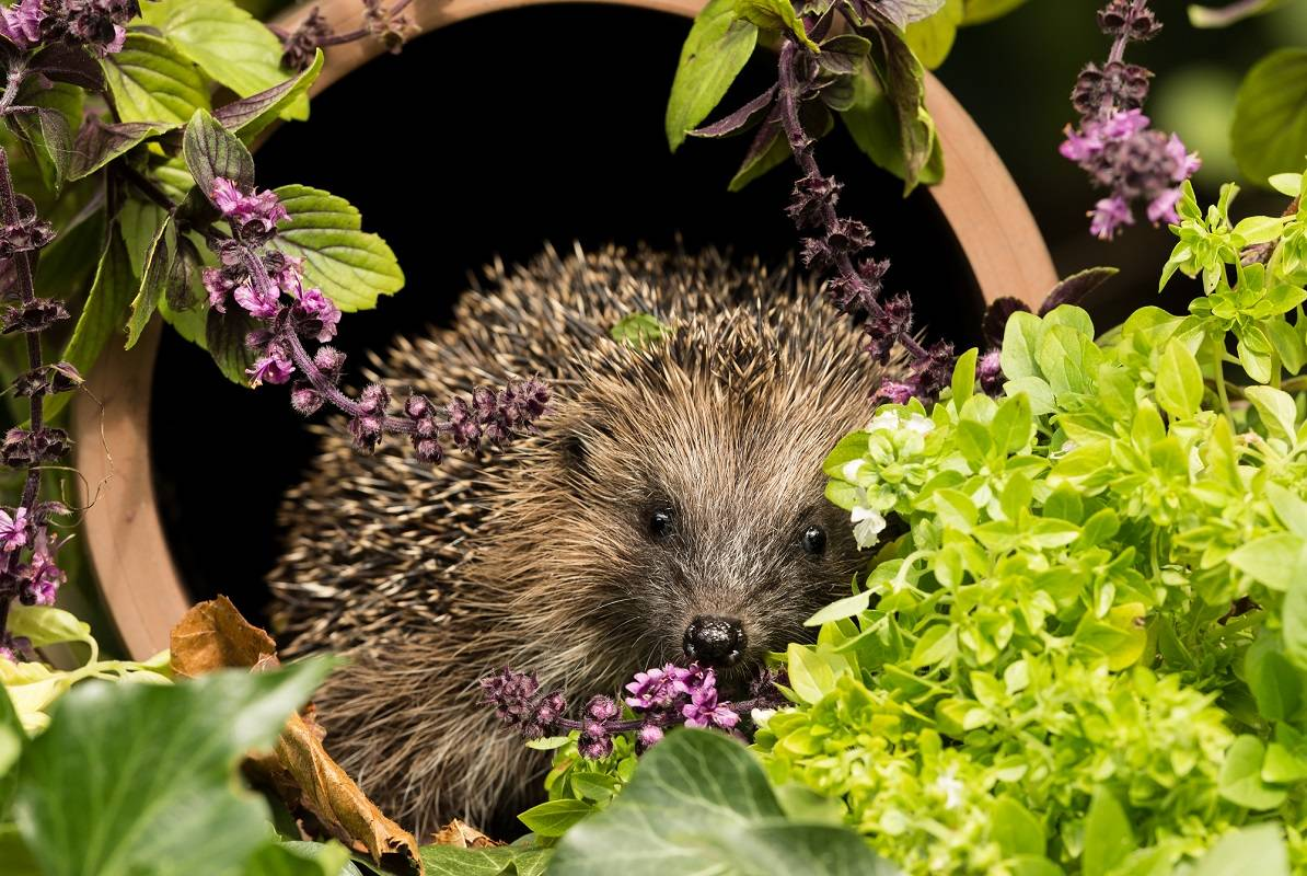 Garden Design to Encourage Wildlife