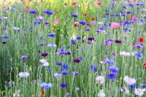 Abingdon's Landscape Gardening