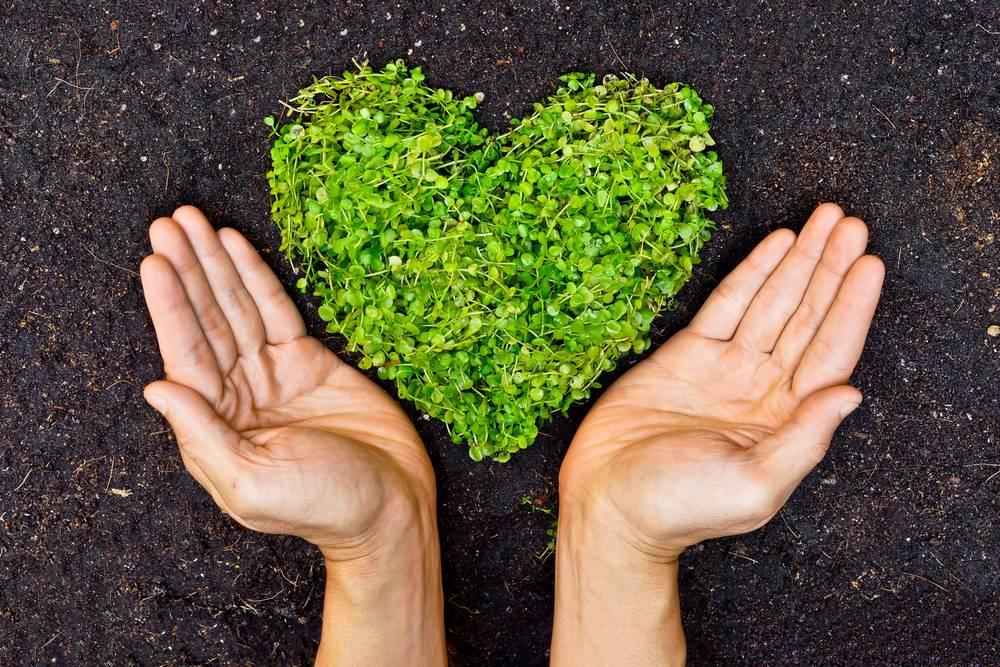 eco-friendly garden ideas