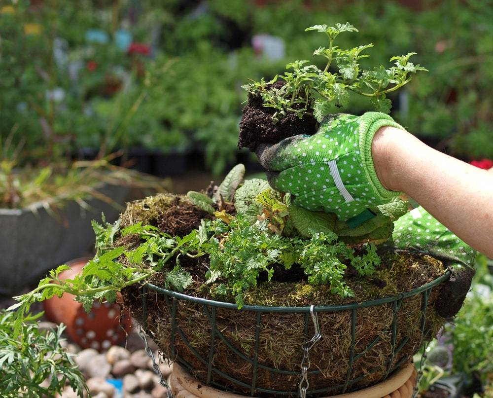 Things To Do In Your Garden In May