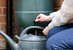 Water Butt Being Emptied Into A Watering Can