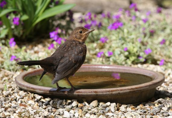 August-Bird-bath