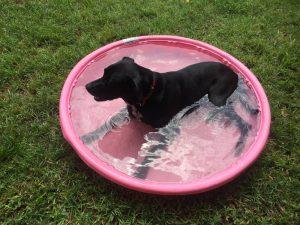 abingdons-dog-friendly