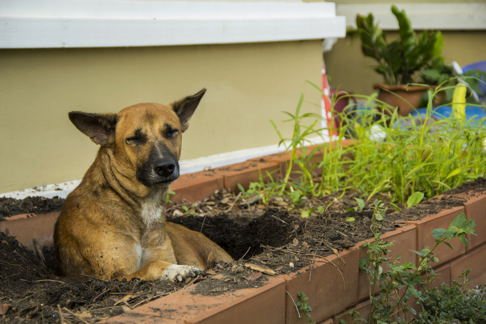 abingdons-dog-landscaping