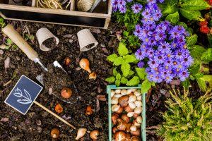october-garden-abingdons