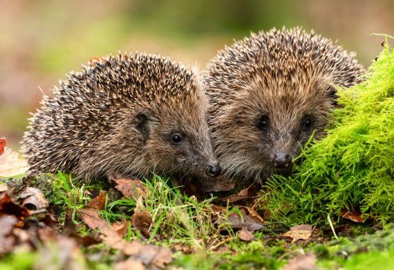 abingdons-winter-wildlife-care