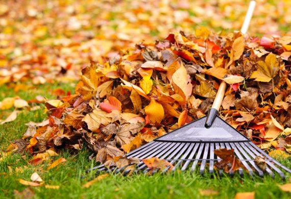 November-garden-care