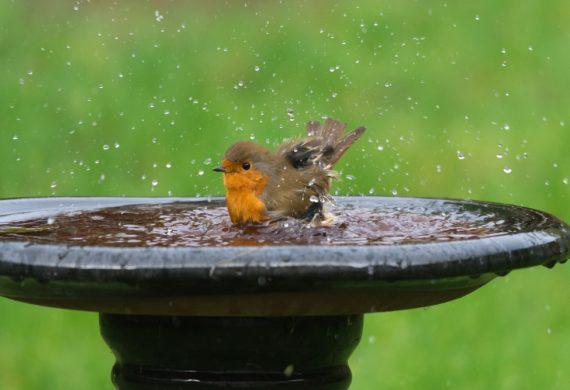 bird-riendly-garden