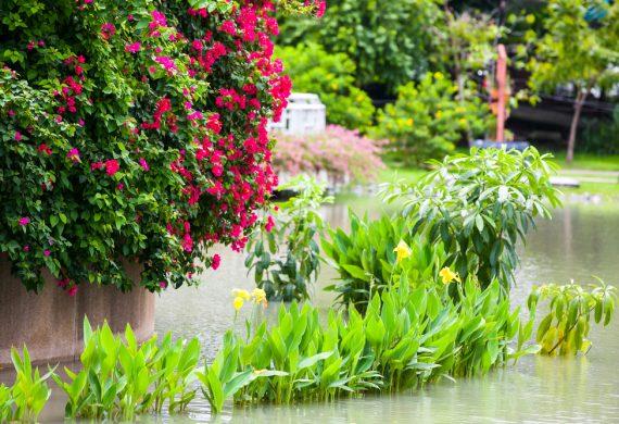 flooded-gardens