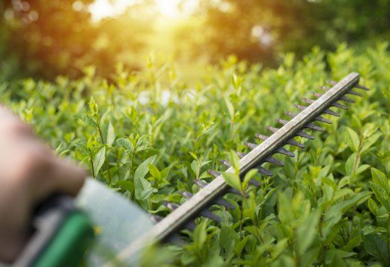 hedges-bushes-shrubs