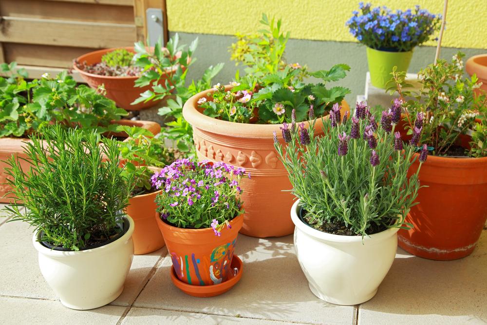 summer-potting-tips