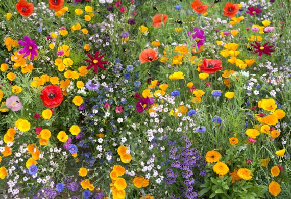 british-flowers
