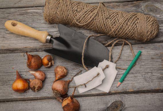 simple-september-gardening